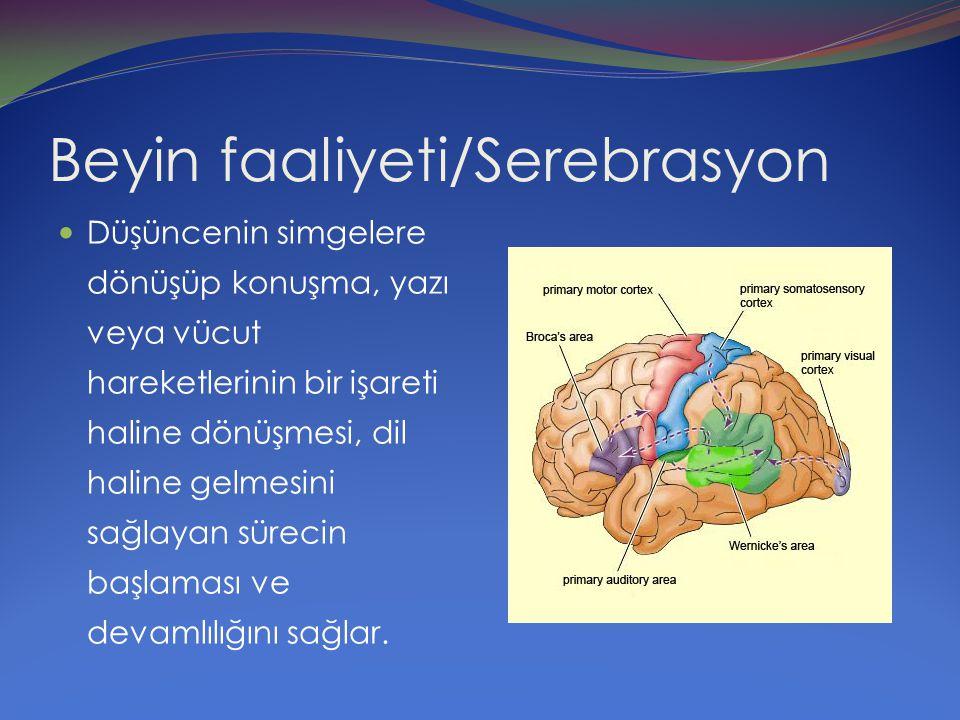 Beyin faaliyeti/Serebrasyon Düşüncenin simgelere dönüşüp konuşma, yazı veya vücut hareketlerinin bir işareti haline dönüşmesi, dil haline gelmesini sa