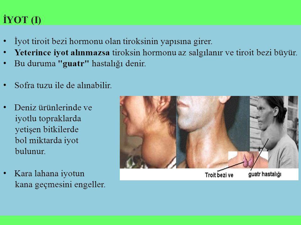 İYOT (I) İyot tiroit bezi hormonu olan tiroksinin yapısına girer.