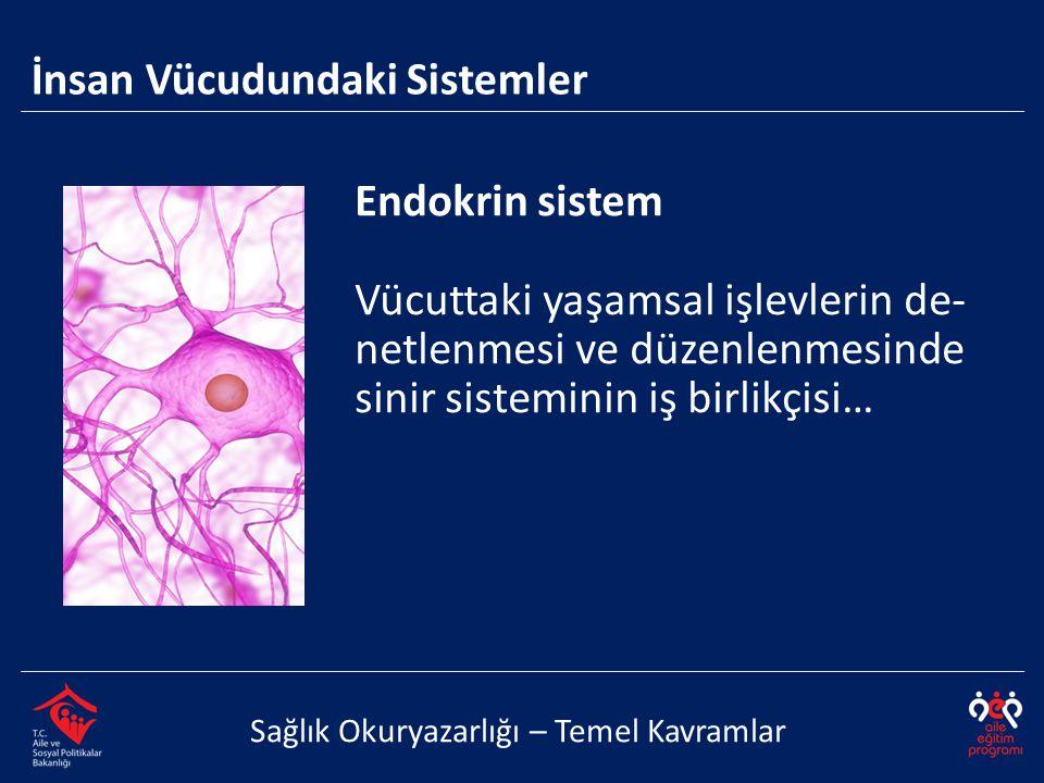 Endokrin sistem Vücuttaki yaşamsal işlevlerin de- netlenmesi ve düzenlenmesinde sinir sisteminin iş birlikçisi… İnsan Vücudundaki Sistemler Sağlık Oku