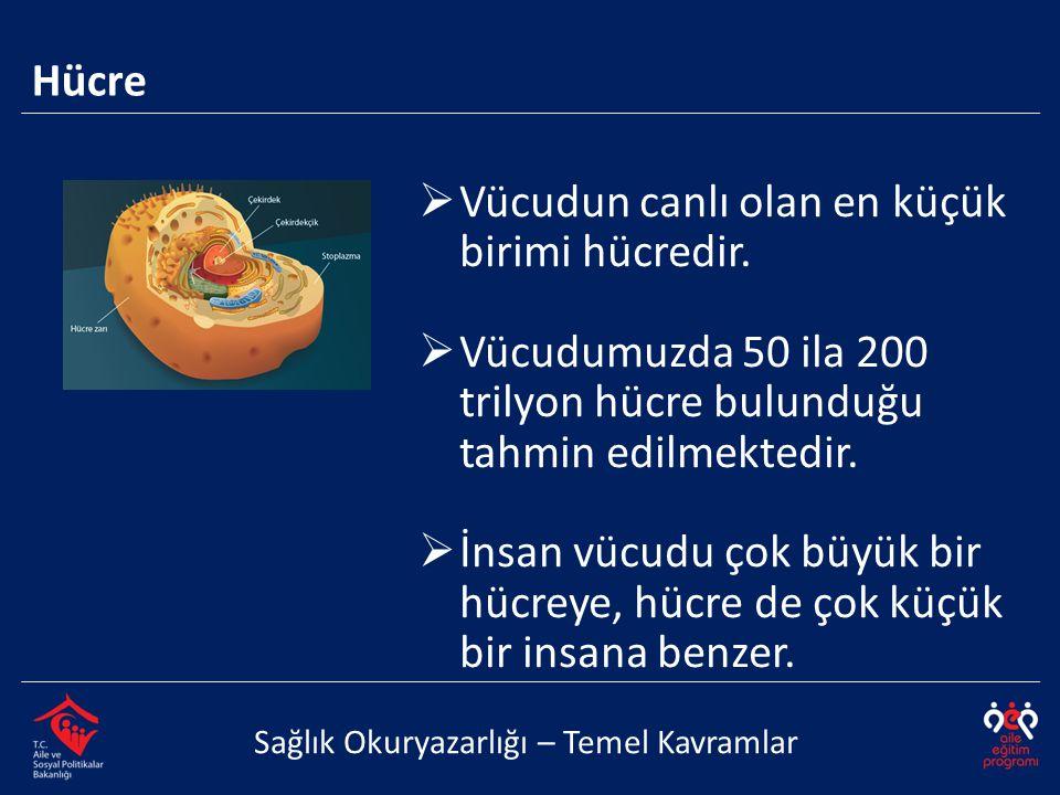  Vücudun canlı olan en küçük birimi hücredir.  Vücudumuzda 50 ila 200 trilyon hücre bulunduğu tahmin edilmektedir.  İnsan vücudu çok büyük bir hücr