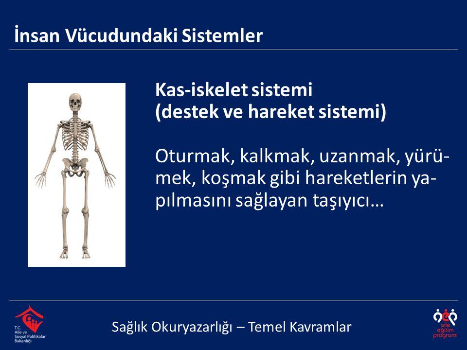 Kas-iskelet sistemi (destek ve hareket sistemi) Oturmak, kalkmak, uzanmak, yürü- mek, koşmak gibi hareketlerin ya- pılmasını sağlayan taşıyıcı… İnsan