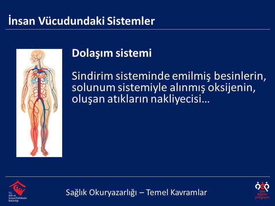 Dolaşım sistemi Sindirim sisteminde emilmiş besinlerin, solunum sistemiyle alınmış oksijenin, oluşan atıkların nakliyecisi… İnsan Vücudundaki Sistemle