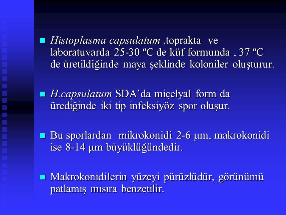 Histoplasma capsulatum,toprakta ve laboratuvarda 25-30 ºC de küf formunda, 37 ºC de üretildiğinde maya şeklinde koloniler oluşturur. Histoplasma capsu