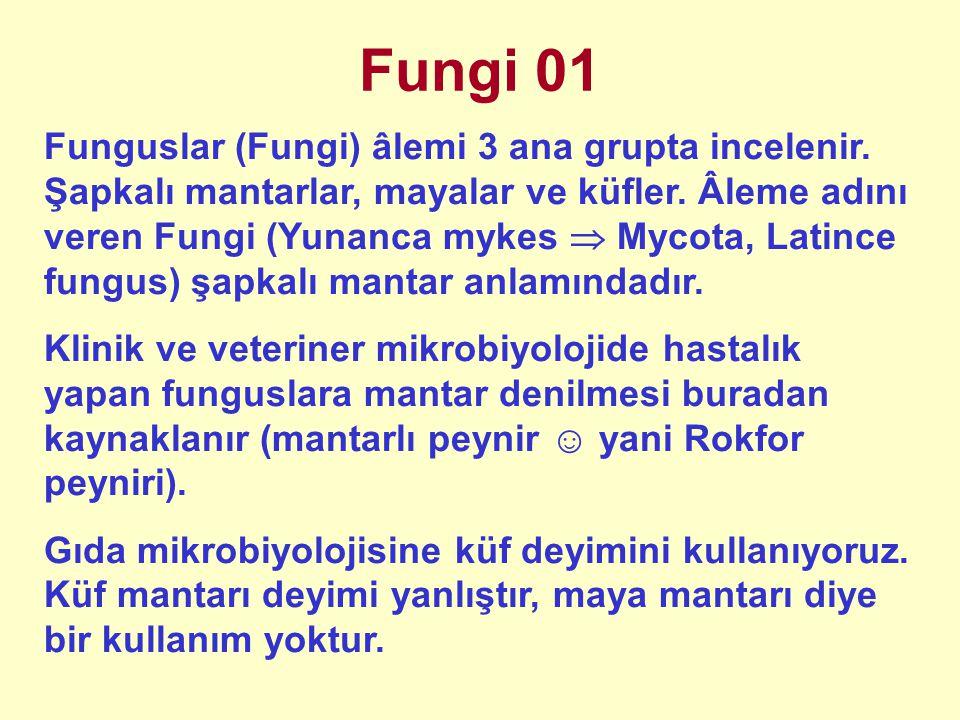 Fungi 01 Funguslar (Fungi) âlemi 3 ana grupta incelenir. Şapkalı mantarlar, mayalar ve küfler. Âleme adını veren Fungi (Yunanca mykes  Mycota, Latinc