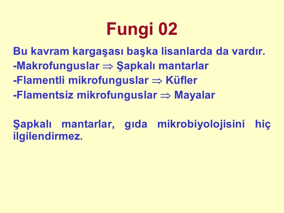 Fungi 02 Bu kavram kargaşası başka lisanlarda da vardır. -Makrofunguslar  Şapkalı mantarlar -Flamentli mikrofunguslar  Küfler -Flamentsiz mikrofungu