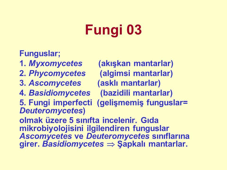 Fungi 03 Funguslar; 1. Myxomycetes (akışkan mantarlar) 2. Phycomycetes (algimsi mantarlar) 3. Ascomycetes (asklı mantarlar) 4. Basidiomycetes (bazidil