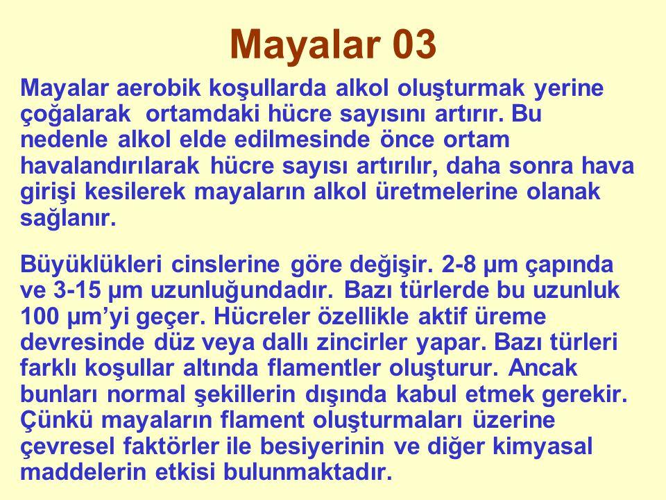 Mayalar 04 Mayalarda çoğalma 4 şekilde olur.