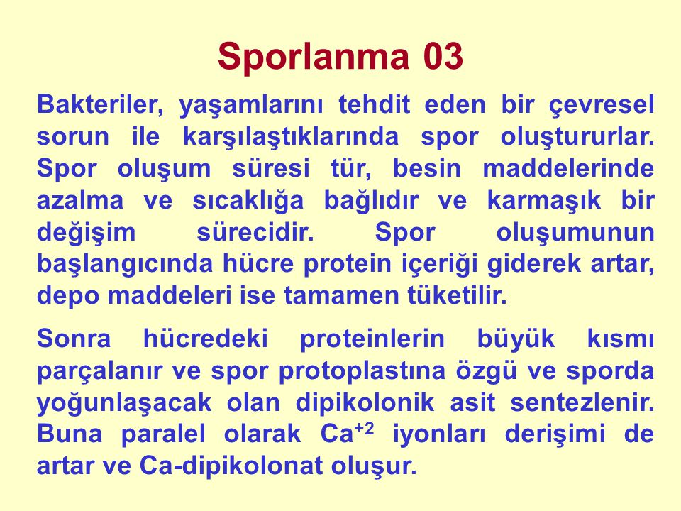 Sporlanma 04 Sporlanma ve jerminasyon