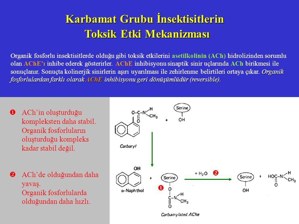 Karbamat Grubu İnsektisitlerin Toksik Etki Mekanizması Organik fosforlulardan farklı olarak AChE inhibisyonu geri dönüşümlüdür (reversible).