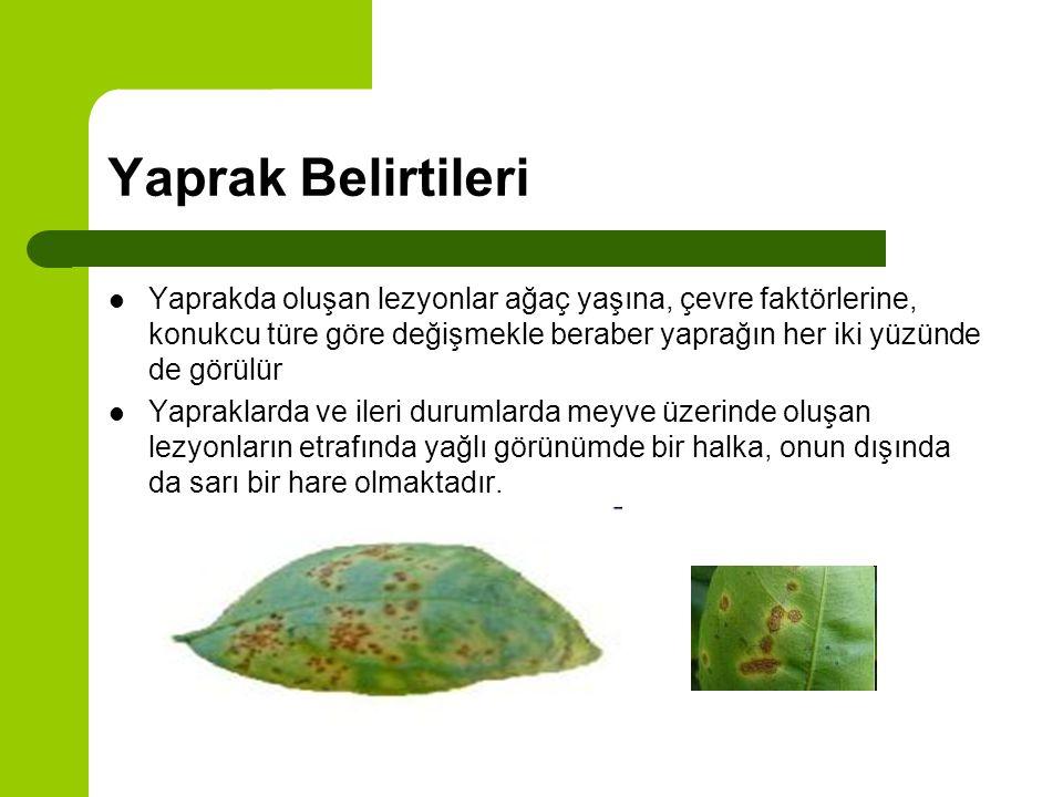 Sürgünde belirtiler Sürgünde de yaprakdakine benzer mantarımsı lekeler halinde lezyonlar oluşur.