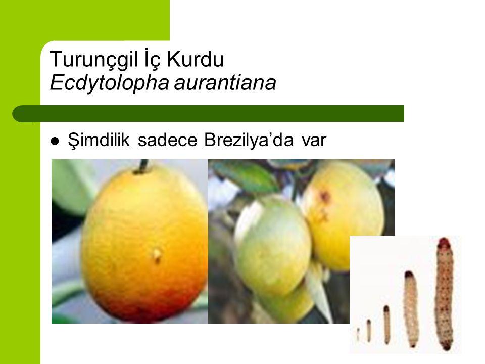 Brevipalpus phoenicid citrus leprosis rhabdovirus Brevipalpus phoenicid zararlı bir akar türü Türkiye'de kayıtlı ancak hastalık simptomu belirlenmemiş Hastalık Orta Amerika ülkelerinde gelmiş