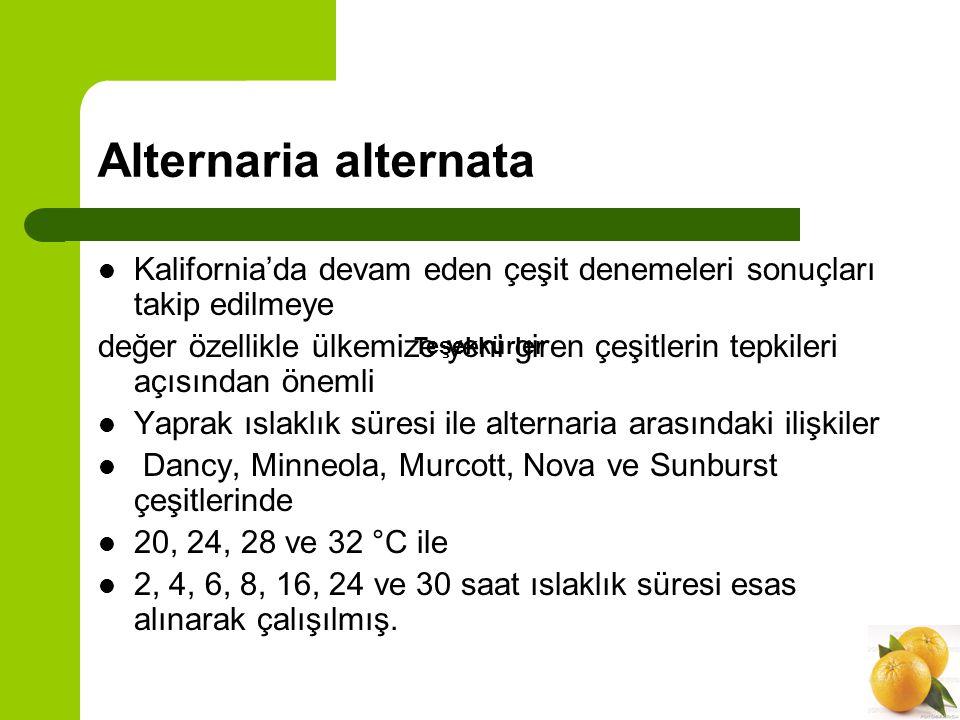 Alternaria alternata Minneola ve Dancy de 2 saatte bütün sıcaklıklarda lezyon oluşmuş, Murcott, Nova ve Sunburst 'de 4 saat yaprak ıslaklığında lezyon oluşmuş.
