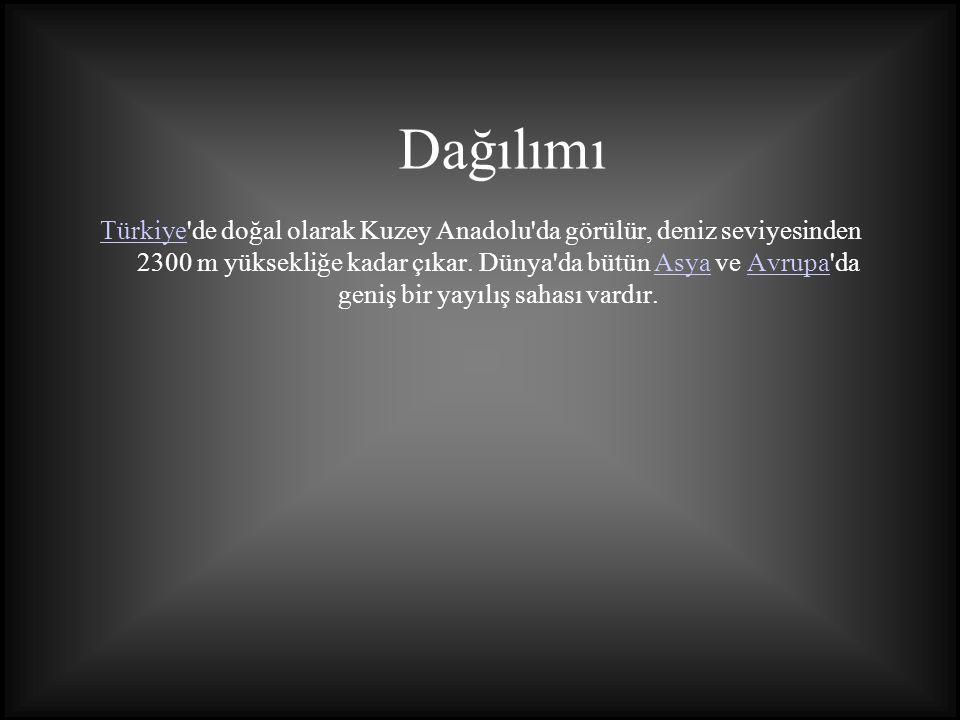 TürkiyeTürkiye'de doğal olarak Kuzey Anadolu'da görülür, deniz seviyesinden 2300 m yüksekliğe kadar çıkar. Dünya'da bütün Asya ve Avrupa'da geniş bir