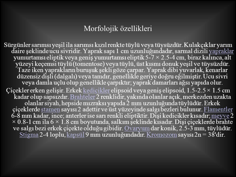 Kaynakça MATARACI, Tuğrul.,Ağaçlar, Marmara Bölgesi Doğal-Egzotik Ağaç Ve Çalıları, (TEMA) Türkiye Erozyonla Mücadele, Ağaçlandırma Ve Doğal Varlıkları Koruma Vakfı Yayını No:39 http://tr.wikipedia.org http://caliban.mpiz-koeln.mpg.de http://herba.msu.ru http://www.naturefg.com http://www.ese.u-psud.fr http://www.hellohello.com.au http://www.s-weeds.net http://www.botanica.wendys.cz http://www.hlasek.com