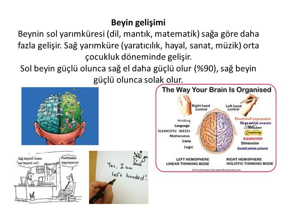 Beyin gelişimi Beynin sol yarımküresi (dil, mantık, matematik) sağa göre daha fazla gelişir. Sağ yarımküre (yaratıcılık, hayal, sanat, müzik) orta çoc
