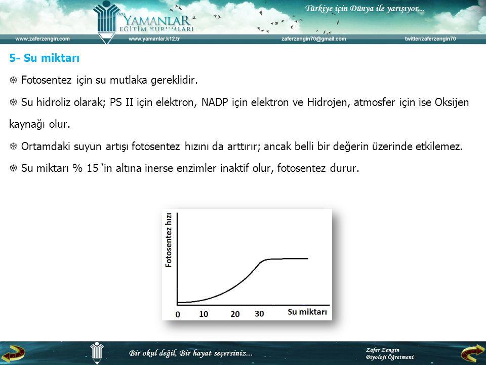 5- Su miktarı  Fotosentez için su mutlaka gereklidir.