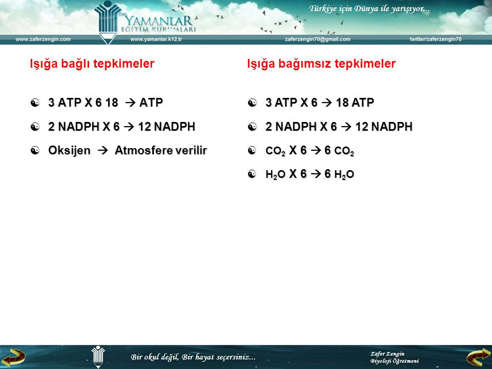 Işığa bağlı tepkimeler  3 ATP X 6 18  ATP  2 NADPH X 6  12 NADPH  Oksijen  Atmosfere verilir Işığa bağımsız tepkimeler  3 ATP X 6  18 ATP  2 NADPH X 6  12 NADPH  CO 2 X 6  6 CO 2  H 2 O X 6  6 H 2 O