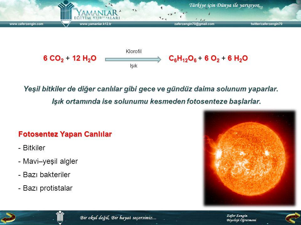 ışıkCO 2 H2OH2O klorofil BESİNO2O2 Atmosfere verilir Glikoz, Fruktoz, Galaktoz, Glikojen, Nişasta, Selüloz, Yağ asitleri, Gliserol, Kolesterol, Vitamin, Aminoasitler, Protein…