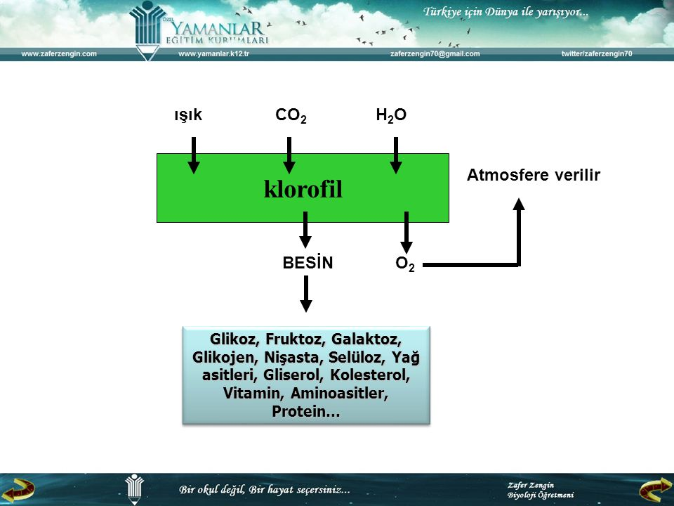 3- Sıcaklık  Fotosentezin ışığa bağımsız tepkimelerinde enzimler görev aldığından sıcaklık değişimlerine karşı çok duyarlıdırlar.