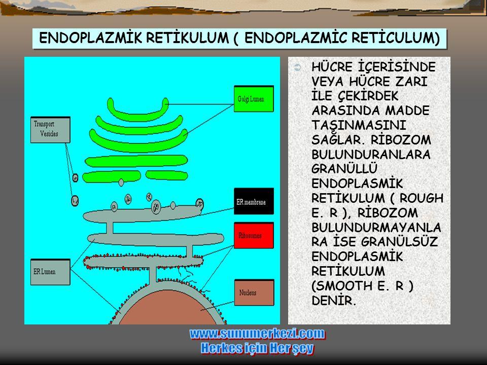  Şekilde bir bitki hücresine ait olan bu mitokondride, organelin membranına yerleşmiş olan proteinleri ve oksidasyonda rol alan enzimleri görmektesin