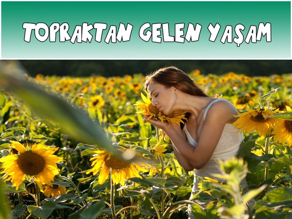Günümüzde SULAMA SORUNU Türkiye Tarımı 'nda en büyük sorun sulama sorunudur.