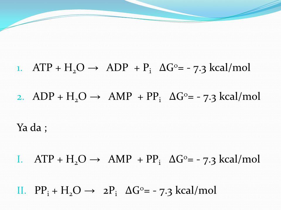 1. ATP + H 2 O → ADP + P i ∆G o = - 7.3 kcal/mol 2. ADP + H 2 O → AMP + PP i ∆G o = - 7.3 kcal/mol Ya da ; I. ATP + H 2 O → AMP + PP i ∆G o = - 7.3 kc