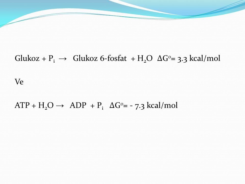 Glukoz + P i → Glukoz 6-fosfat + H 2 O ∆G o = 3.3 kcal/mol Ve ATP + H 2 O → ADP + P i ∆G o = - 7.3 kcal/mol