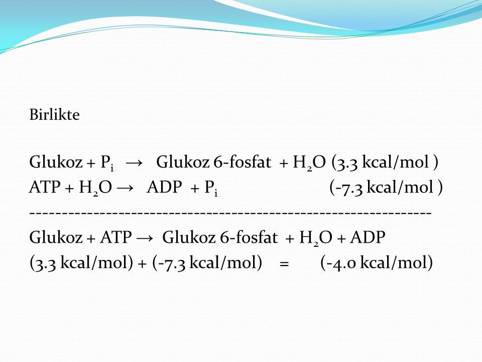 Birlikte Glukoz + P i → Glukoz 6-fosfat + H 2 O (3.3 kcal/mol ) ATP + H 2 O → ADP + P i (-7.3 kcal/mol ) ---------------------------------------------