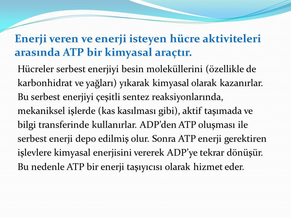 Enerji veren ve enerji isteyen hücre aktiviteleri arasında ATP bir kimyasal araçtır. Hücreler serbest enerjiyi besin moleküllerini (özellikle de karbo