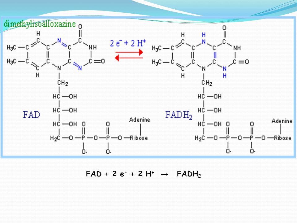 FAD + 2 e - + 2 H + → FADH 2
