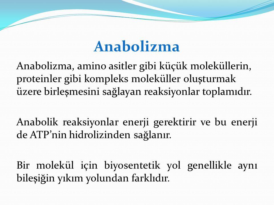 Anabolizma Anabolizma, amino asitler gibi küçük moleküllerin, proteinler gibi kompleks moleküller oluşturmak üzerebirleşmesini sağlayan reaksiyonlar t