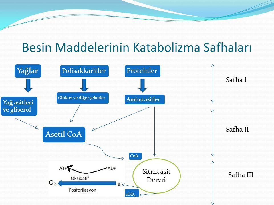 Besin Maddelerinin Katabolizma Safhaları Yağlar PolisakkaritlerProteinler Glukoz ve diğer şekerler Yağ asitleri ve gliserol Amino asitler Asetil CoA S