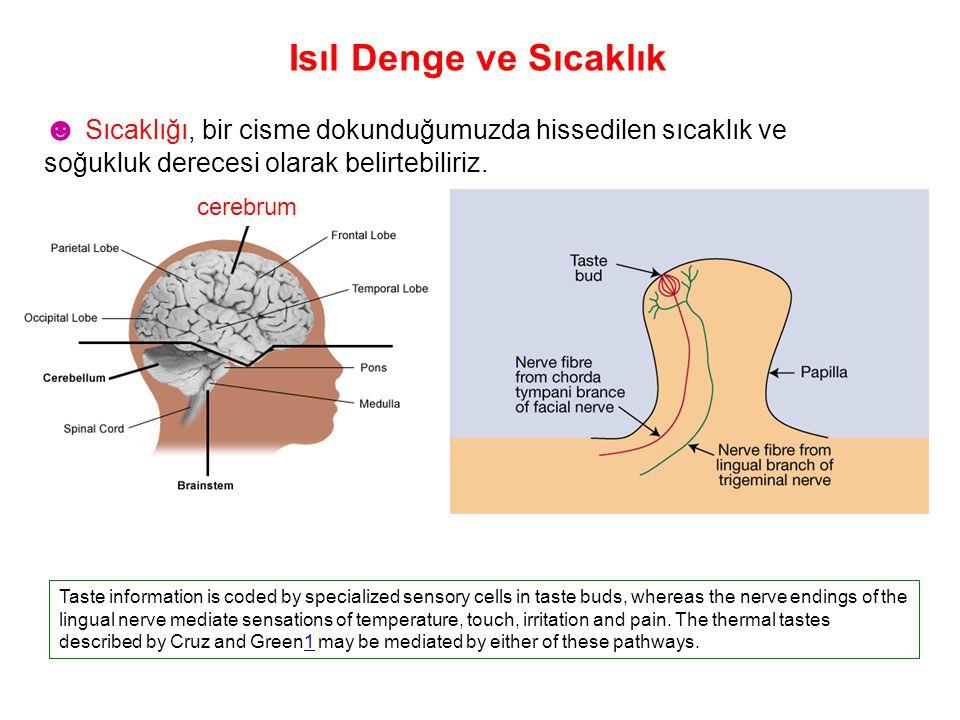 Isıl Denge ve Sıcaklık Taste information is coded by specialized sensory cells in taste buds, whereas the nerve endings of the lingual nerve mediate s