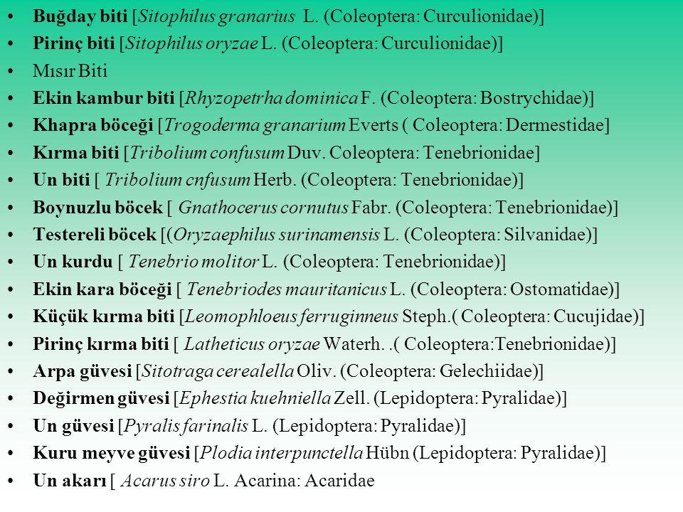 Buğday biti  Sitophilus granarius L. (Coleoptera: Curculionidae)  Pirinç biti  Sitophilus oryzae L. (Coleoptera: Curculionidae)  Mısır Biti Ekin k