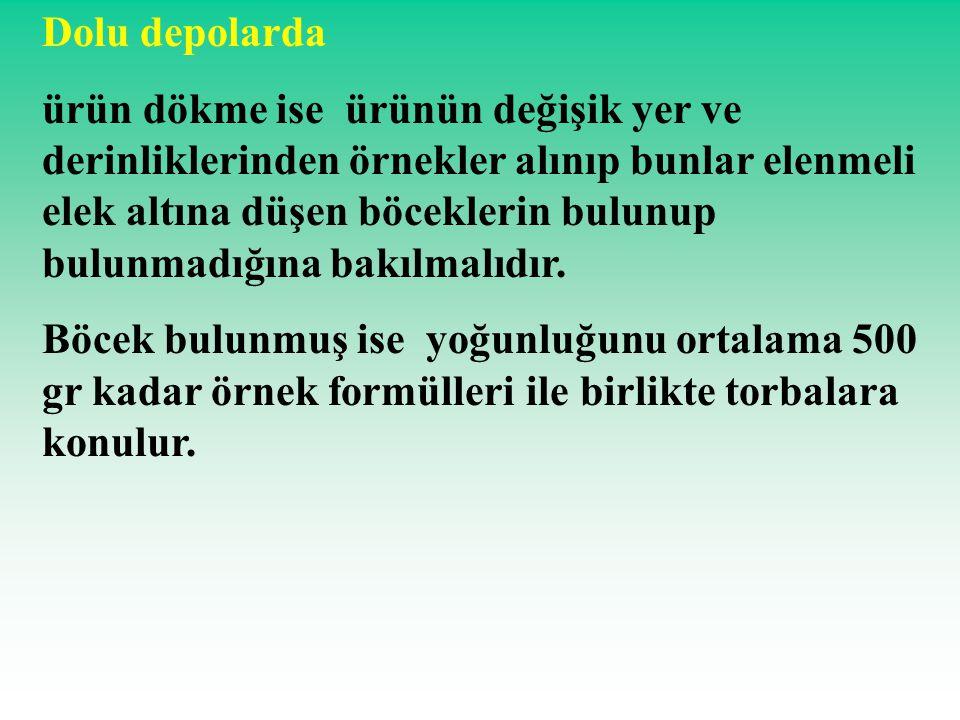 Un kurdu Ergin parlak koyu kahve veya siyah renkte, 14-17 mm.