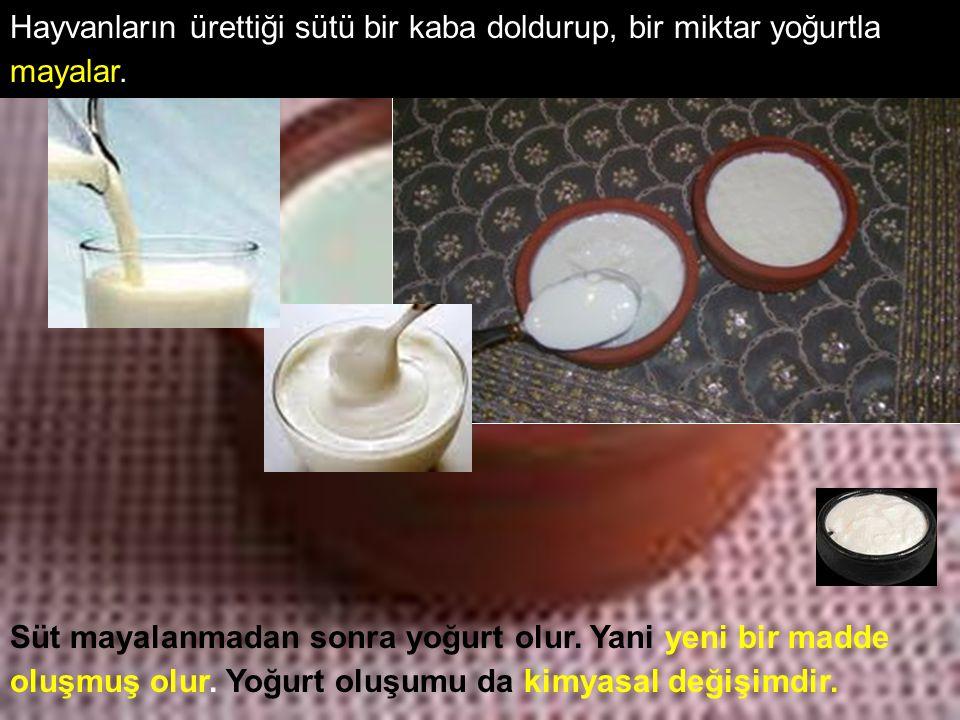 Hayvanların ürettiği sütü bir kaba doldurup, bir miktar yoğurtla mayalar. Süt mayalanmadan sonra yoğurt olur. Yani yeni bir madde oluşmuş olur. Yoğurt