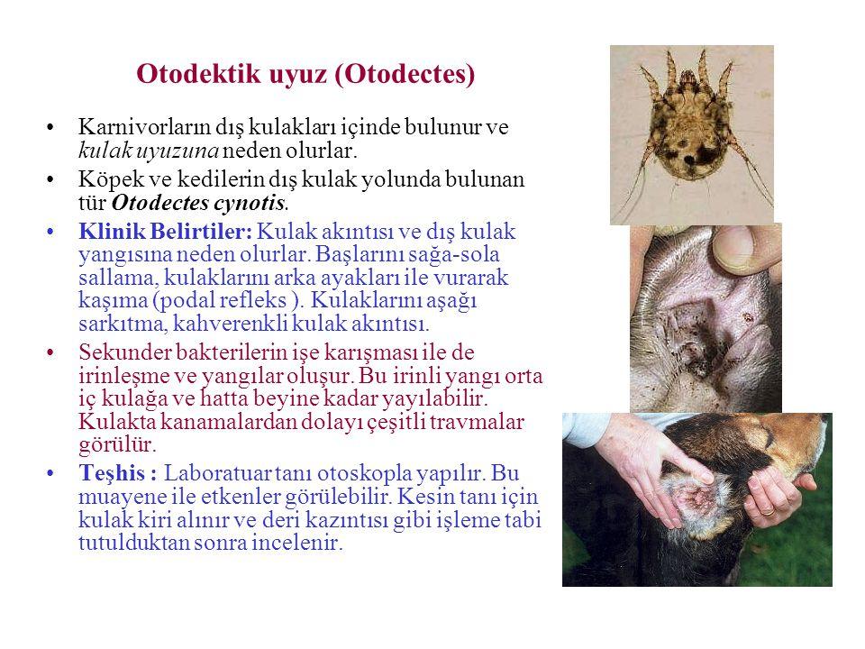 Otodektik uyuz (Otodectes) Karnivorların dış kulakları içinde bulunur ve kulak uyuzuna neden olurlar. Köpek ve kedilerin dış kulak yolunda bulunan tür