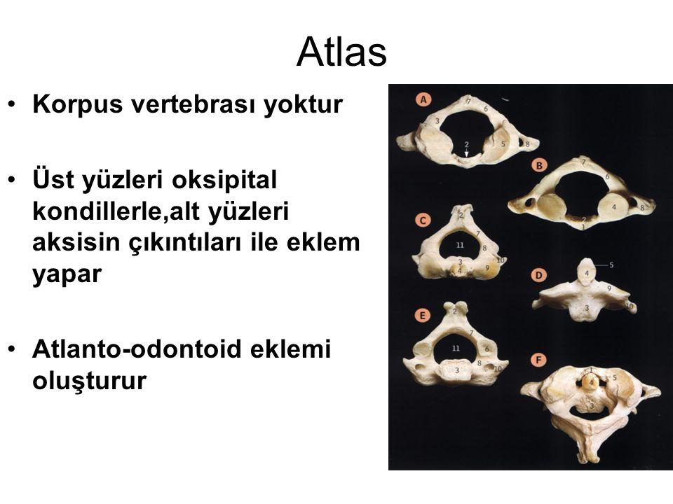 Atlas Korpus vertebrası yoktur Üst yüzleri oksipital kondillerle,alt yüzleri aksisin çıkıntıları ile eklem yapar Atlanto-odontoid eklemi oluşturur