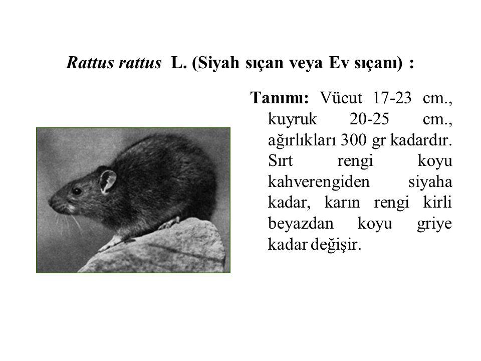 Rattus rattus L. (Siyah sıçan veya Ev sıçanı) : Tanımı: Vücut 17-23 cm., kuyruk 20-25 cm., ağırlıkları 300 gr kadardır. Sırt rengi koyu kahverengiden
