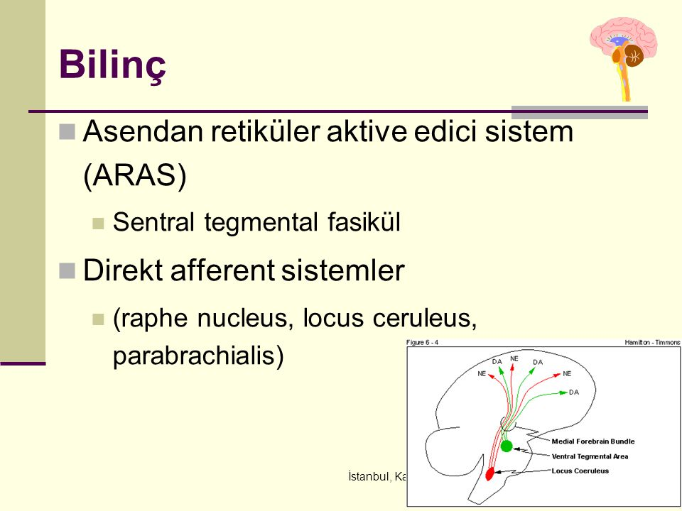 İstanbul, Kasım 2011 Bilinç Asendan retiküler aktive edici sistem (ARAS) Sentral tegmental fasikül Direkt afferent sistemler (raphe nucleus, locus cer