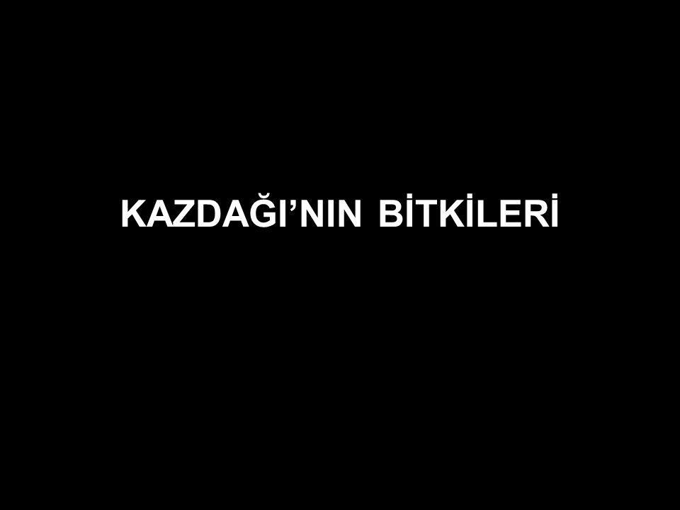 KAZDAĞI'NIN BİTKİLERİ