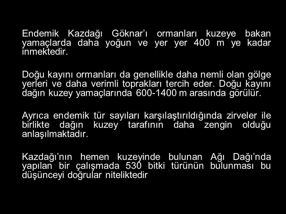 Koruma statüsü: Tehlikede (EN) SIĞIR KUYRUĞU (Verbascum scamandri Murb.) Bu bitkinin gen merkezi Türkiye'dir ve dünyadaki en fazla türe sahiptir.