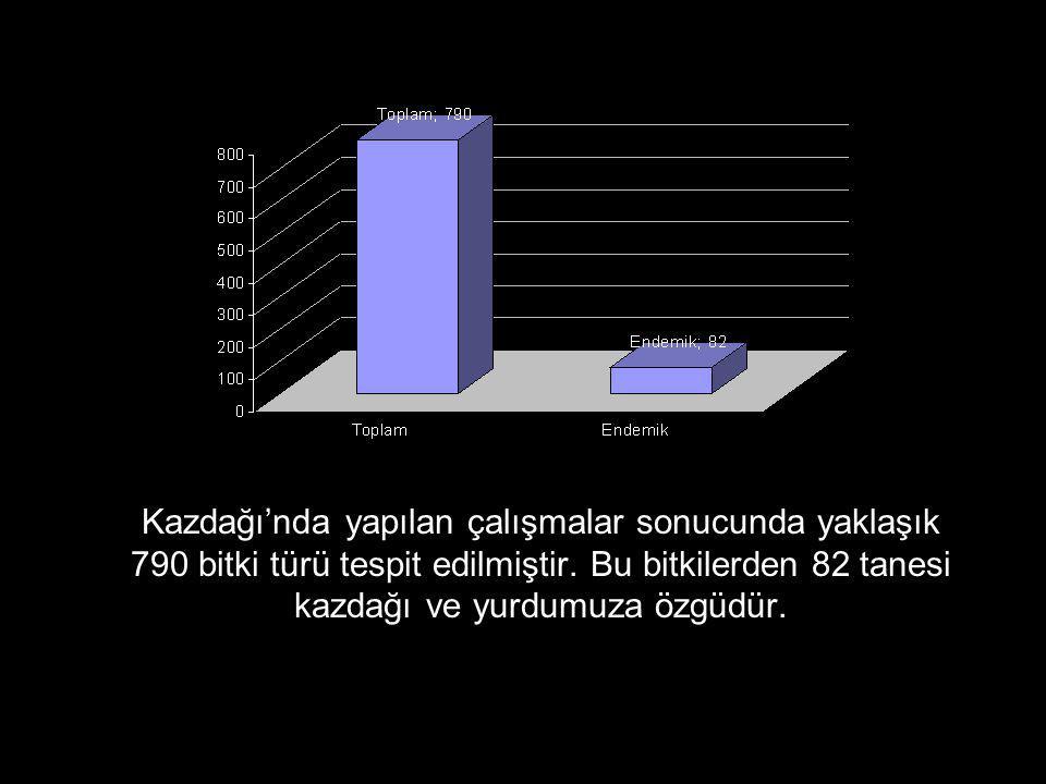 AKBABA ( Gyps fulvus) Yirmi sene öncesine kadar Kaz Dağları'nda gruplar oluştururken günümüzde sayıları çok azalmıştır.