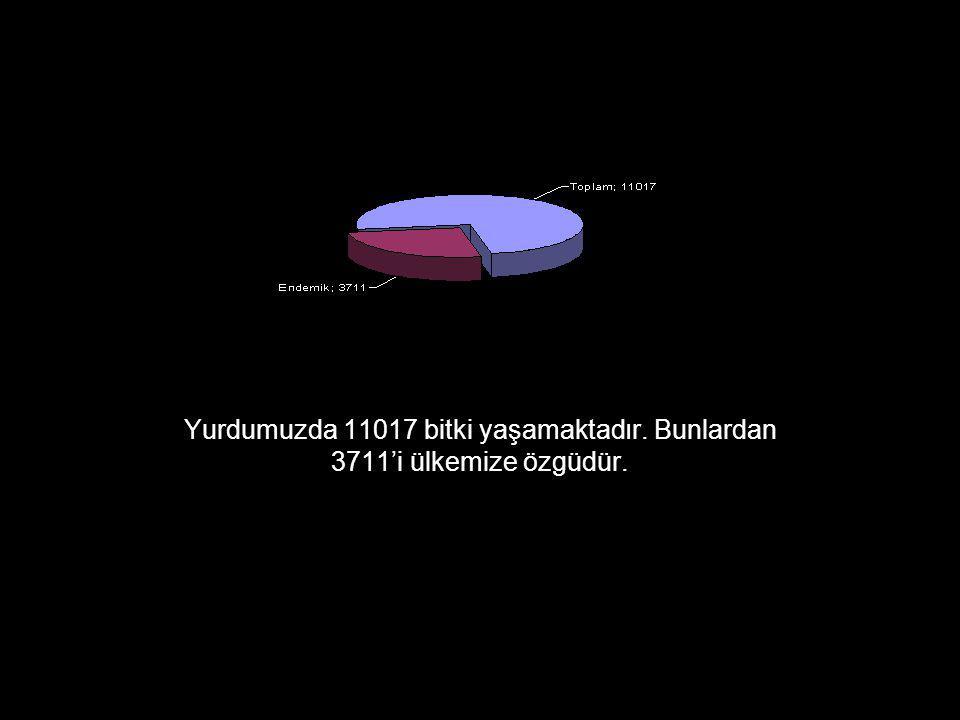 Kazdağı'nda bulunan endemiklerin Türkiye endemiklerine oranı