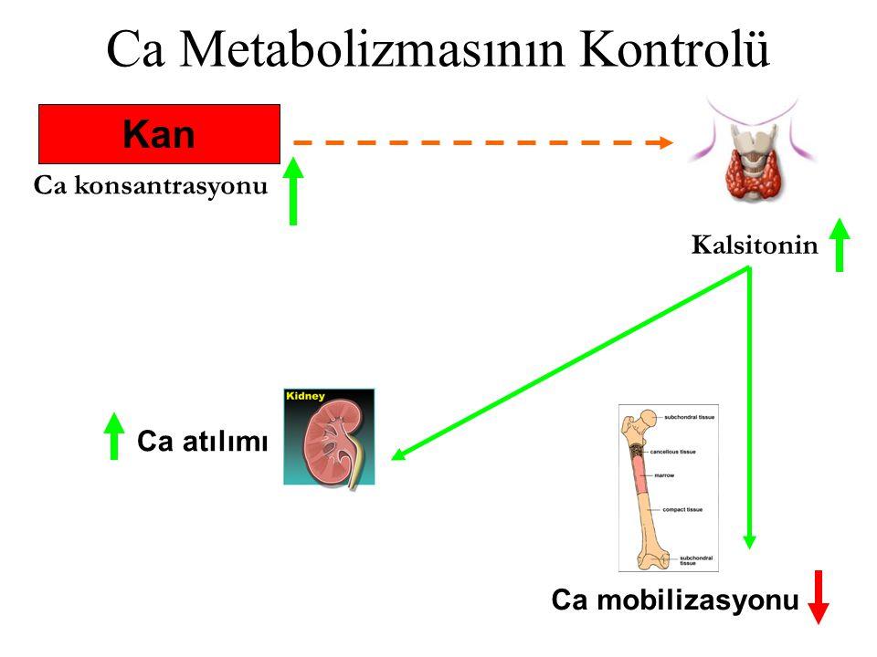 Ca Metabolizmasının Kontrolü Ca konsantrasyonu Kalsitonin Kan Ca mobilizasyonu Ca atılımı