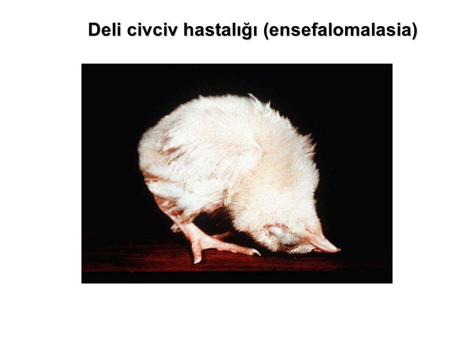 Deli civciv hastalığı (ensefalomalasia)