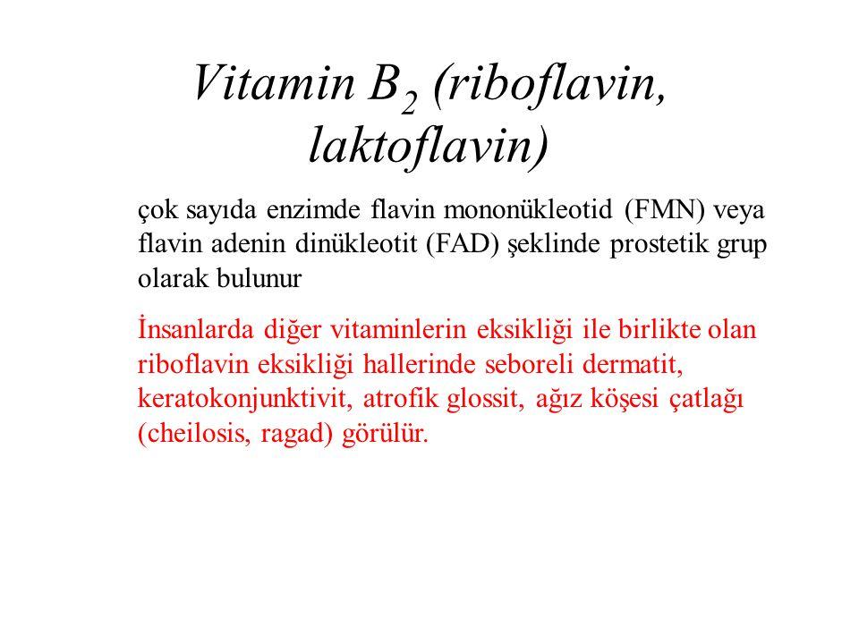 Vitamin B 2 (riboflavin, laktoflavin) çok sayıda enzimde flavin mononükleotid (FMN) veya flavin adenin dinükleotit (FAD) şeklinde prostetik grup olara