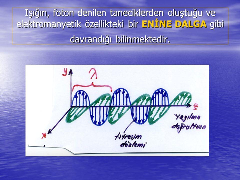 Yani, yayılma doğrultusuna dik bir düzlemde titreşim yaparak yayılan bir ENİNE DALGA gibi davrandığı da bilinmektedir.