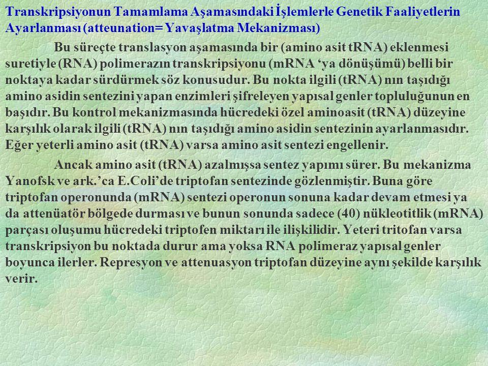 Transkripsiyonun Tamamlama Aşamasındaki İşlemlerle Genetik Faaliyetlerin Ayarlanması (atteunation= Yavaşlatma Mekanizması) Bu süreçte translasyon aşam