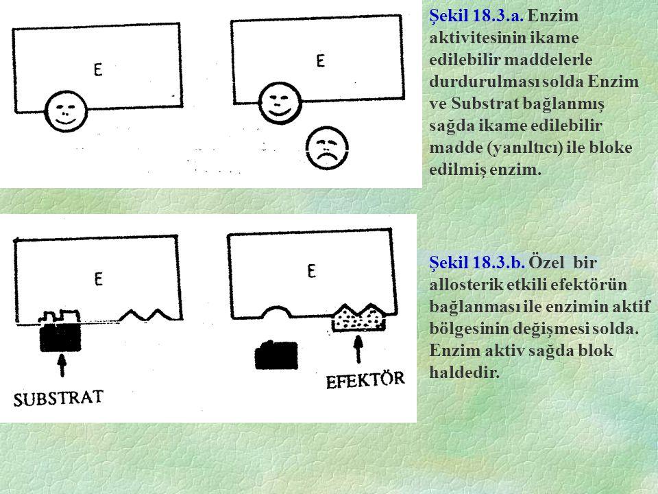 Şekil 18.3.a. Enzim aktivitesinin ikame edilebilir maddelerle durdurulması solda Enzim ve Substrat bağlanmış sağda ikame edilebilir madde (yanıltıcı)